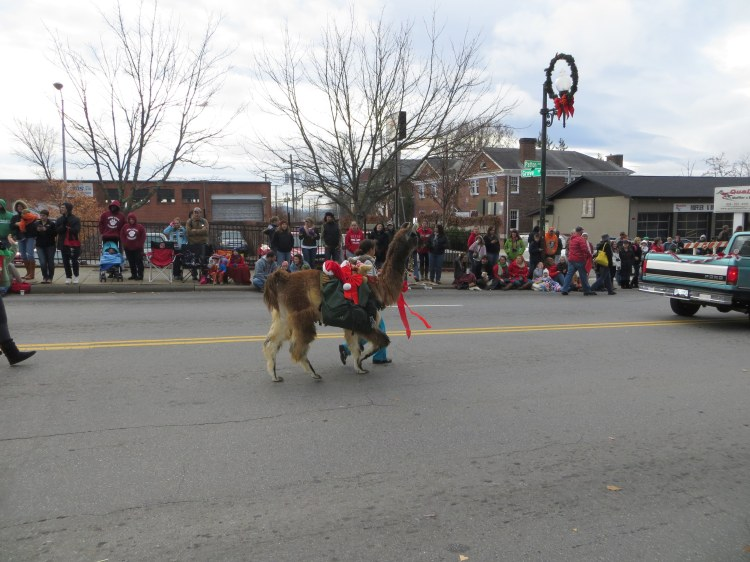 Even alpacas got to march in the holiday parade!