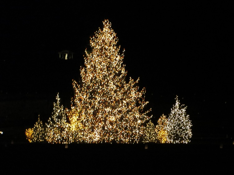Lighted trees on Biltmore's front lawn