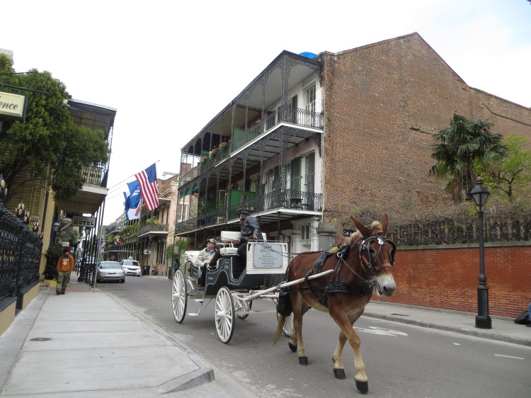 Tired of walking?  How about taking a tour on a horse drawn carriage?