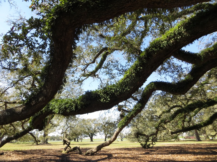 Standing under the branches of the massive live oak trees