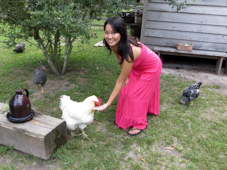 Feeding my favorite rooster