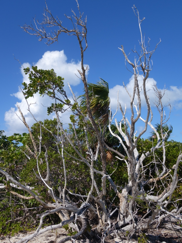 Trees on Little Water Cay