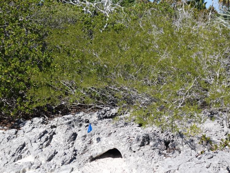 The iguanas dwell inside these rocks, earning them the name Rock Iguanas