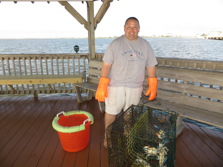 Freshly caught crabs