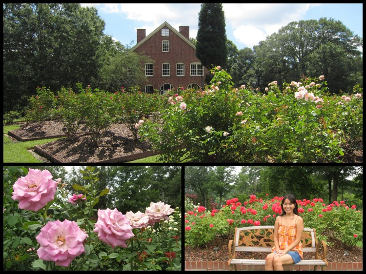 The Robert L. Staton Memorial Rose Garden